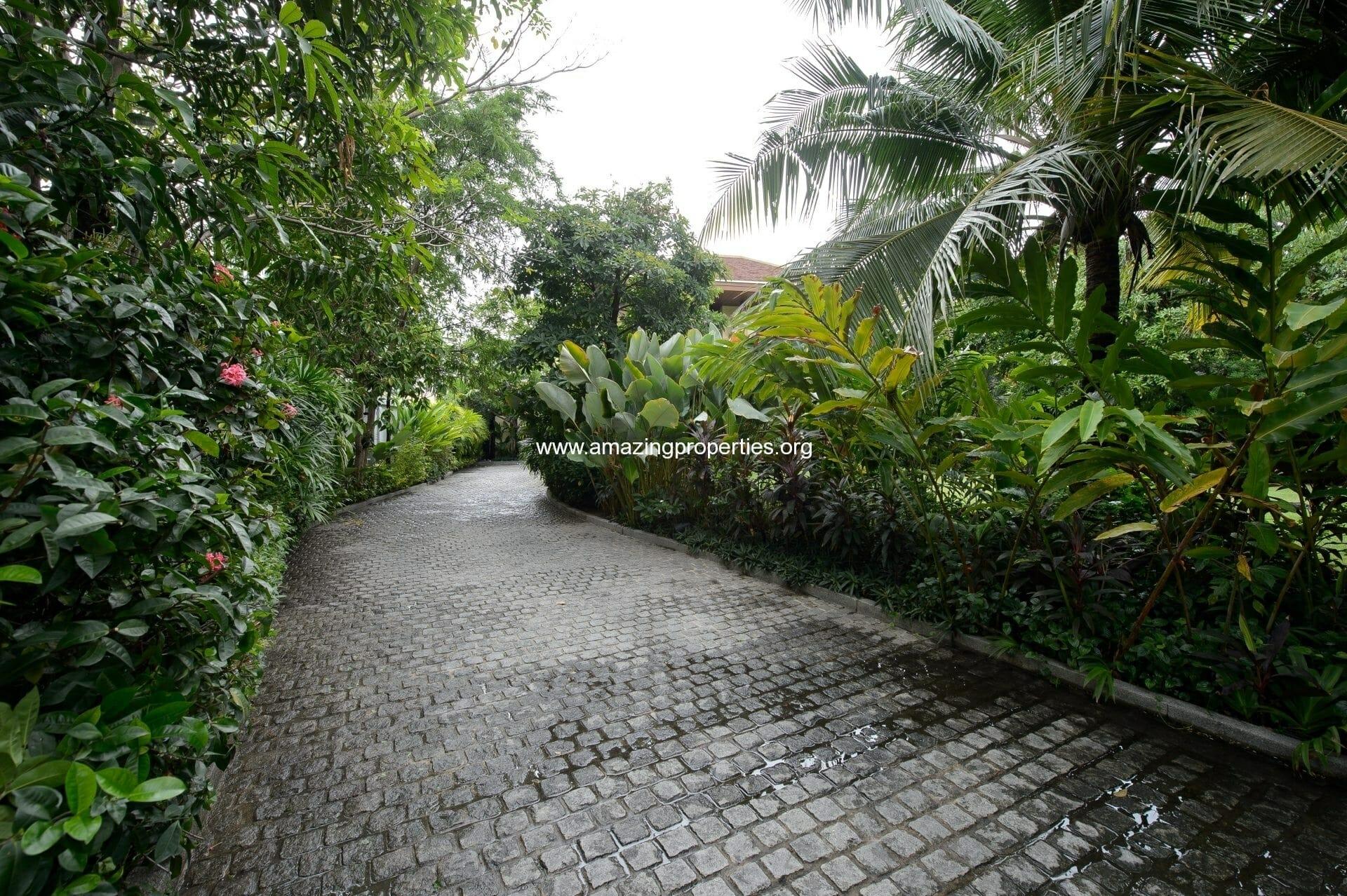 Driveway-Plants